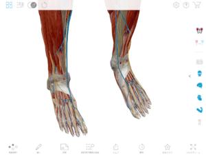 京都市 中京区 藤枝整骨院 両下肢の静脈の画像です。