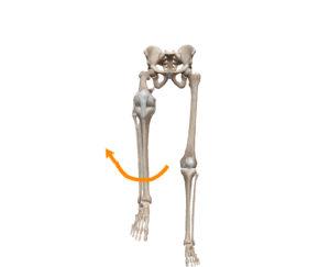 京都市 中京区 四条大宮 藤枝整骨院 正面から見た股関節及び膝関節屈曲位での股関節内旋の動きを表した図です。