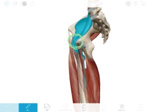 京都市 中京区 四条大宮 藤枝整骨院 腸腰筋と股関節の痛み
