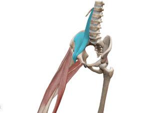 京都市 中京区 四条大宮 藤枝整骨院 右側の股関節屈曲時の腸腰筋を左斜め前方から見た図です
